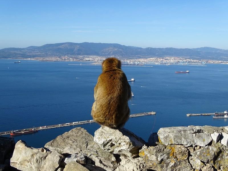 22-maimute-gibraltar