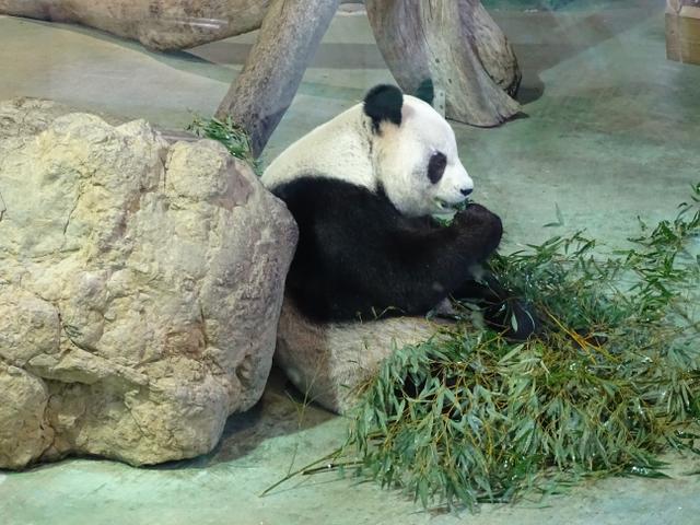 71-panda