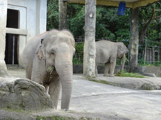 74-elefant