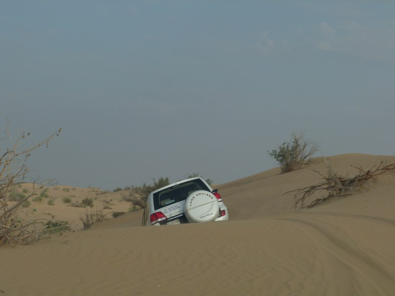 10. Safari in desert
