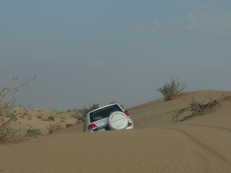 10. Safari in desert