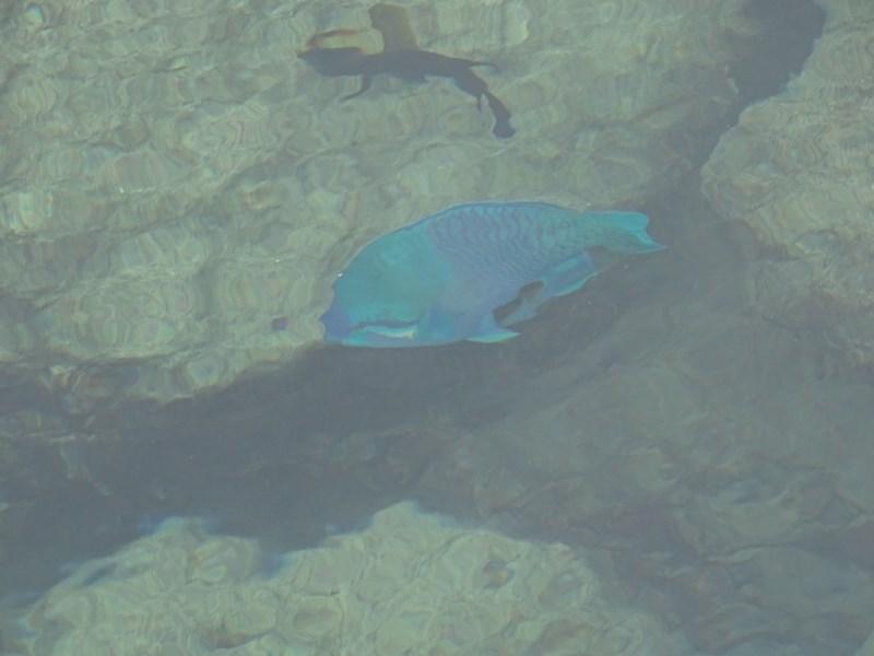 11. Peste Palau