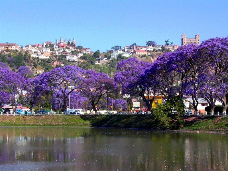 01. Madagascar