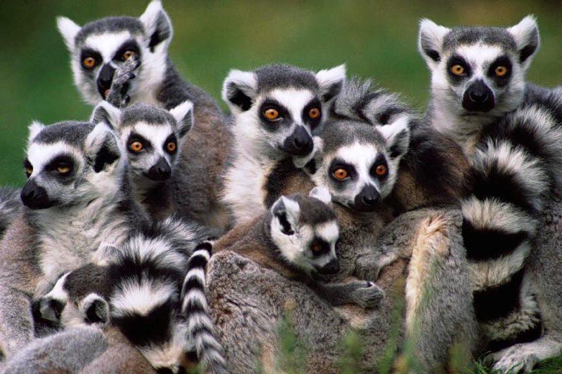 02. Lemuri