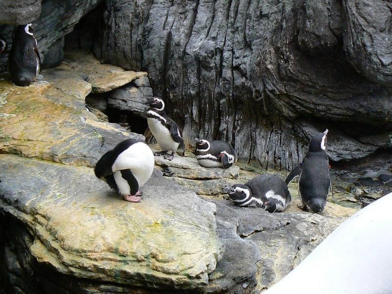 04. Pinguini in Oceanario