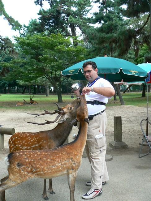 11. Cerbii din Nara