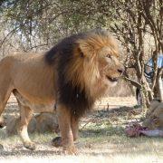 Leu Africa De Sud