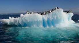 07. Antarctica
