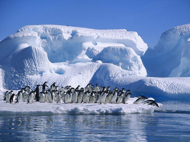 08. Pinguini Antarctica