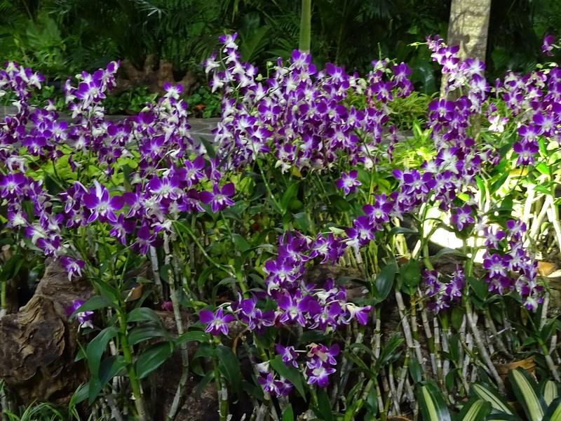 38. Orhidee