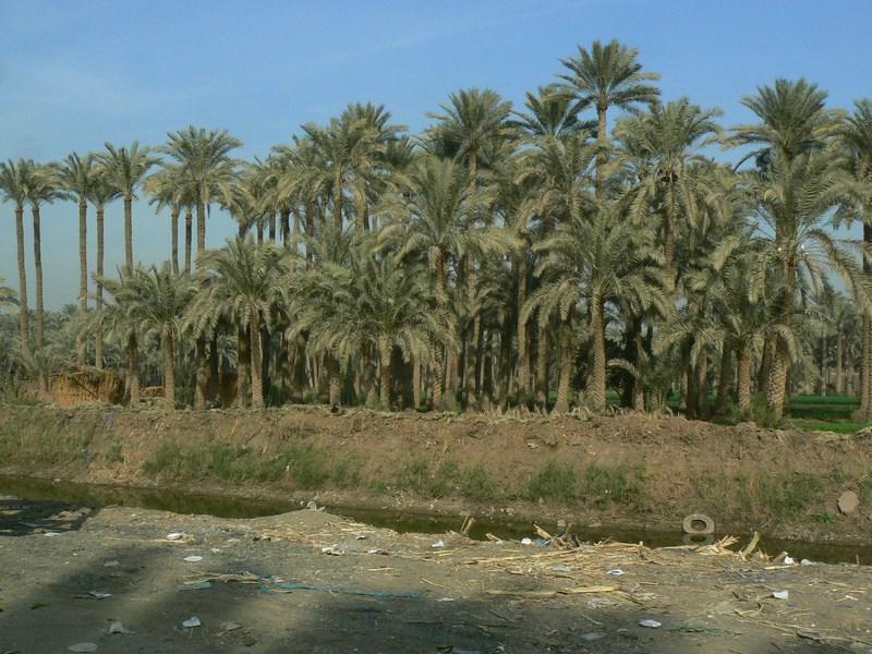 00. Egipt, dar al Nilului