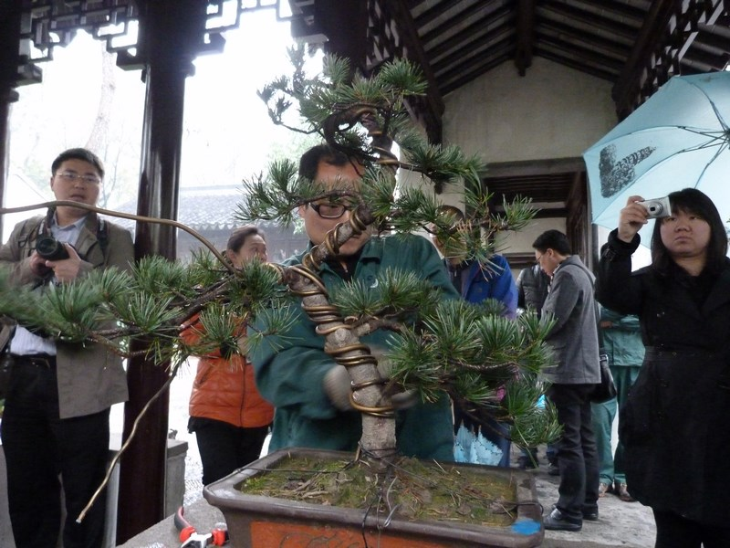 04. Maestrul de Bonsai