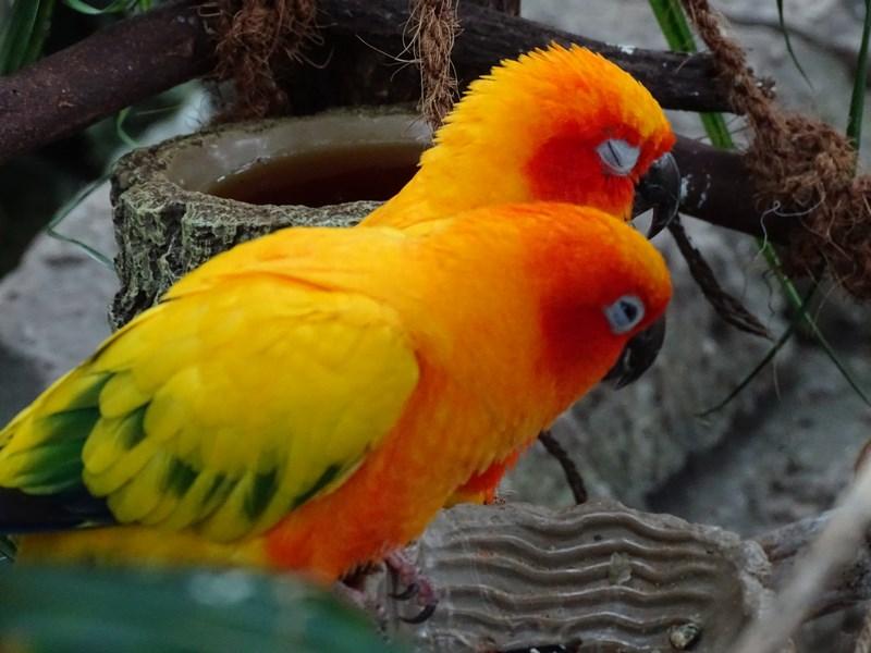 19. Papagali