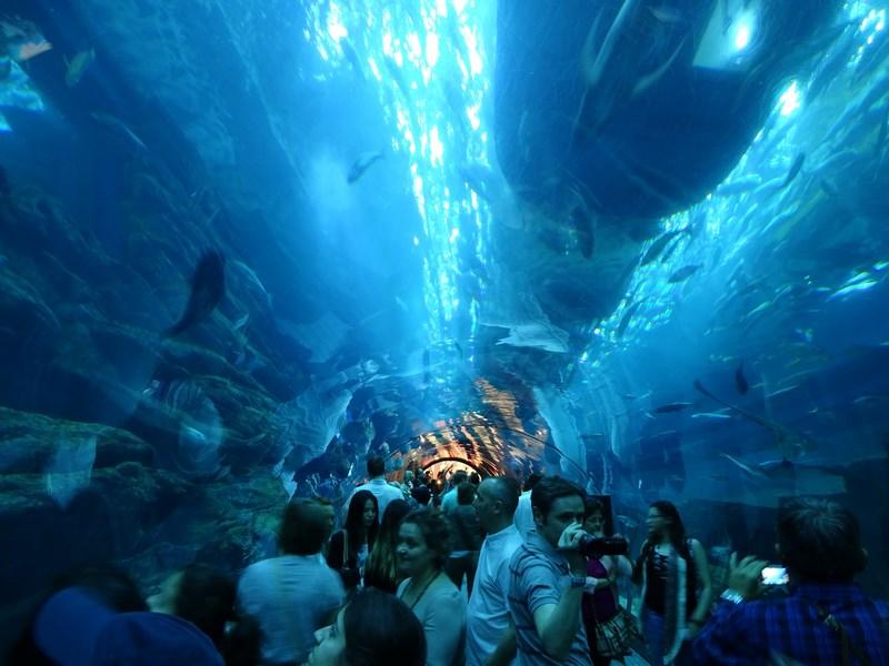 28. Dubai Aquarium & Underwater Zoo