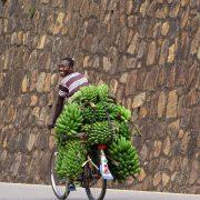 20. Transport Banane