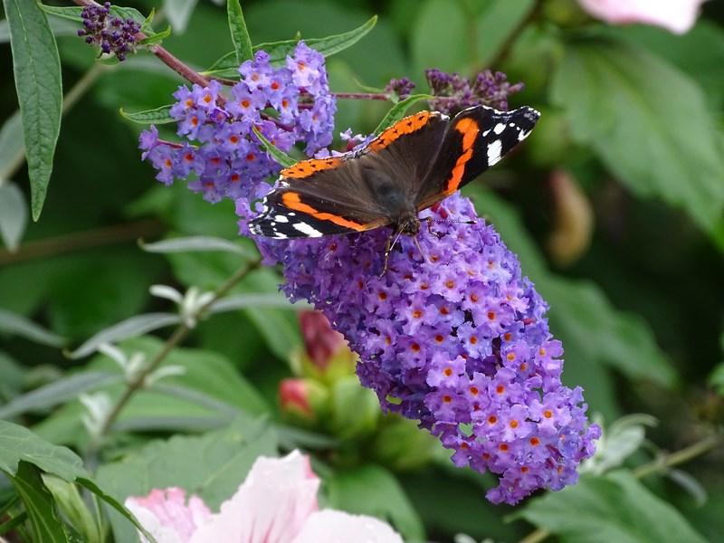 . Fluture