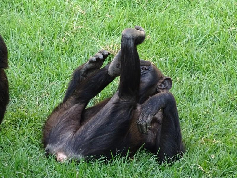 . Maimutareli