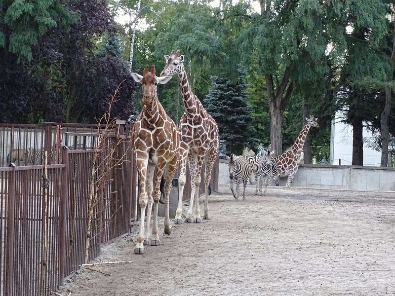 . Zoo Wroclaw