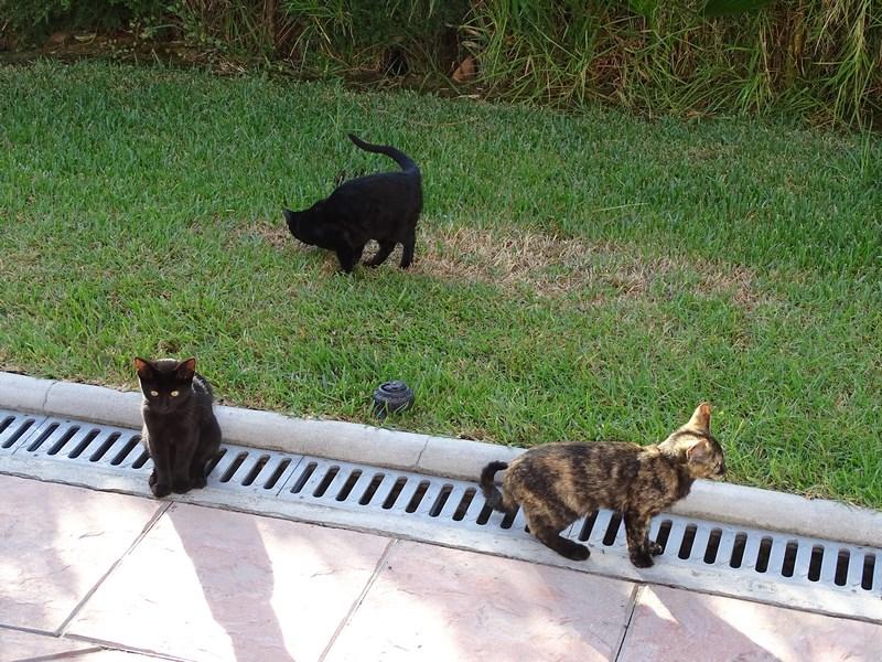 Pisici In Hotel