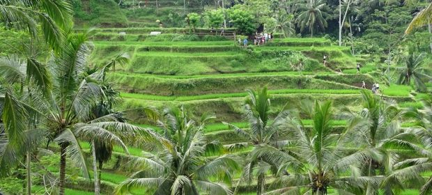 . Orezarii Bali