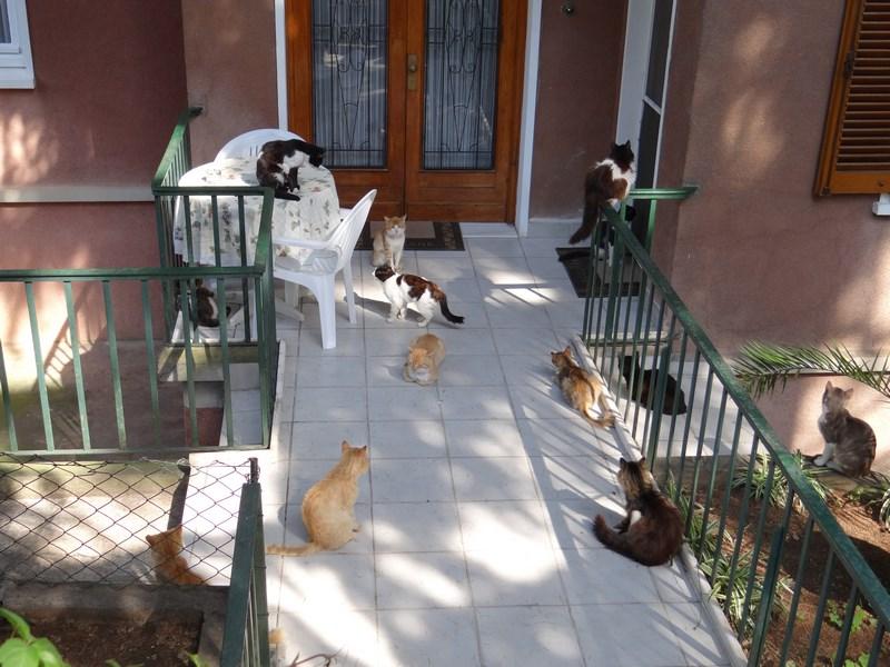 Pisici Istanbul