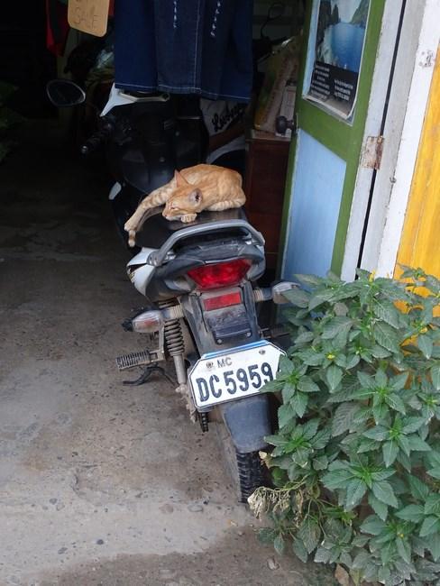 Pisica El Nido
