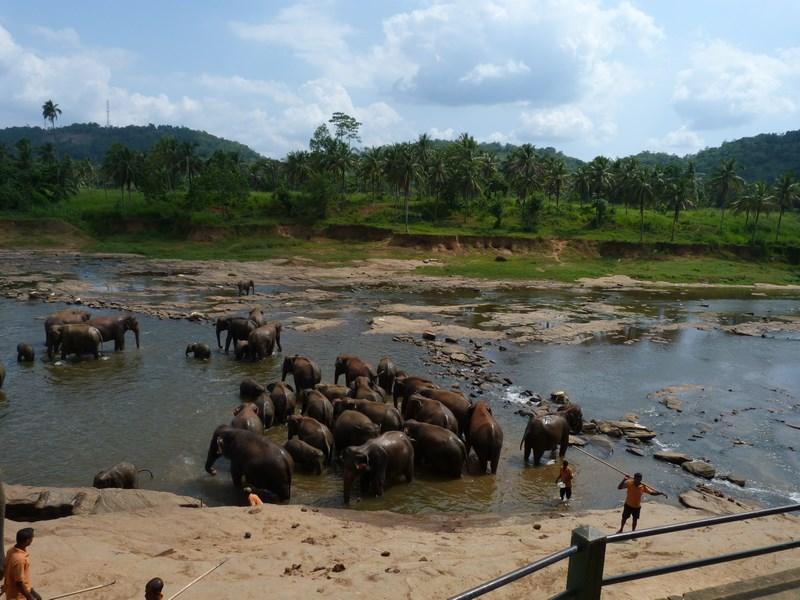 Orfelinat Elefanti