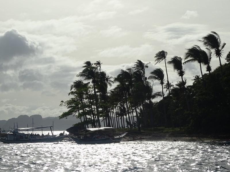 Palmieri Apus De Soare