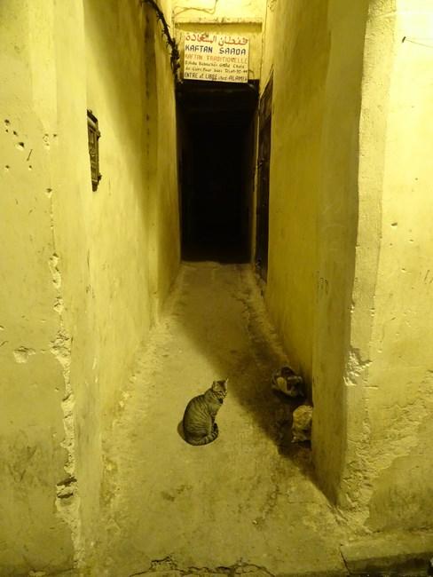 Pisici In Maroc