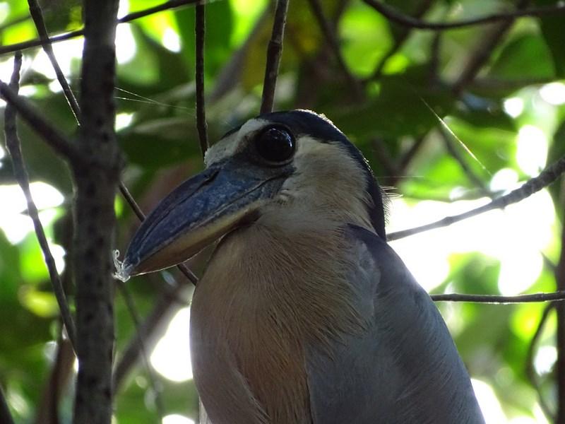 Pasare Nicaragua