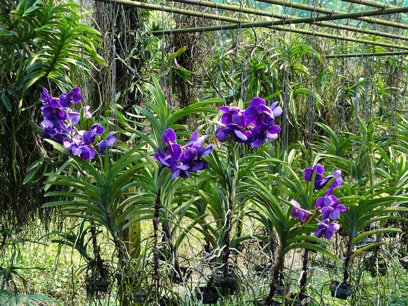 Orhidee Mov