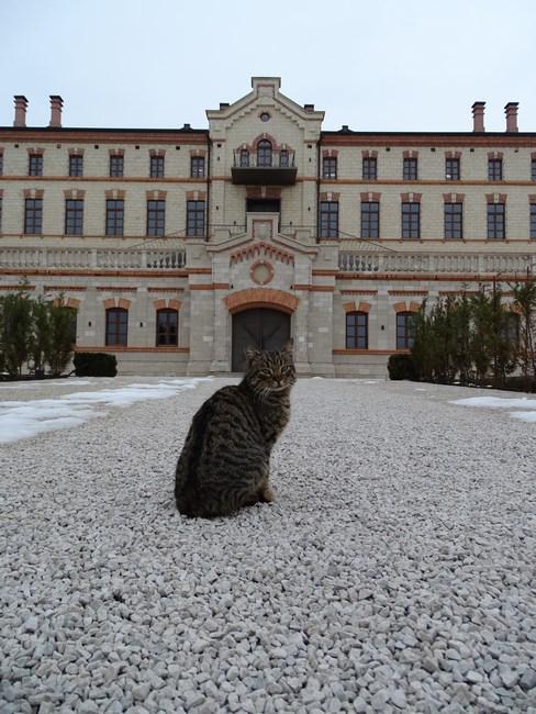Muscat Motan Castel Mimi