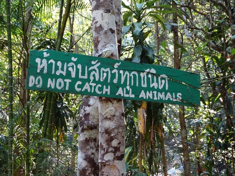 Avertisment Thailanda