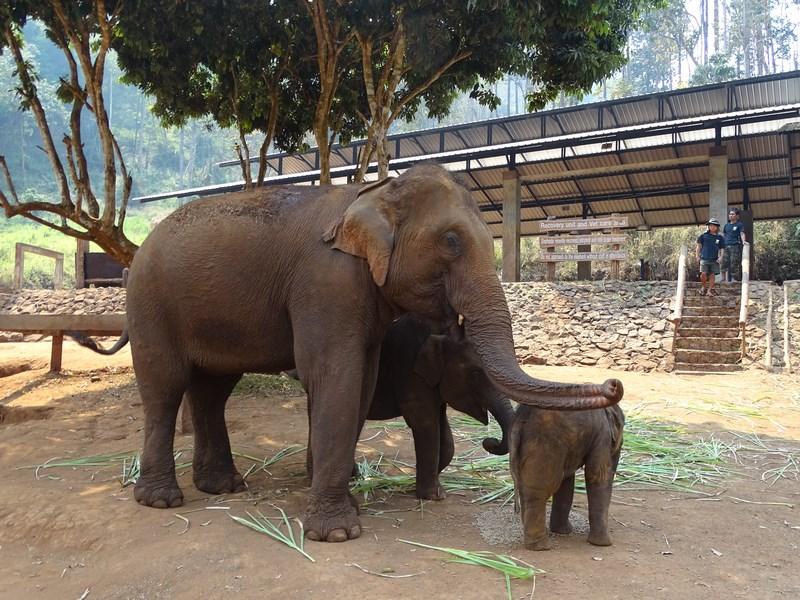 Familiei Elefanti