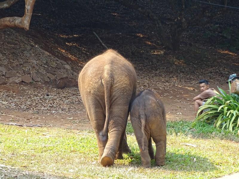 Joaca De Elefanti