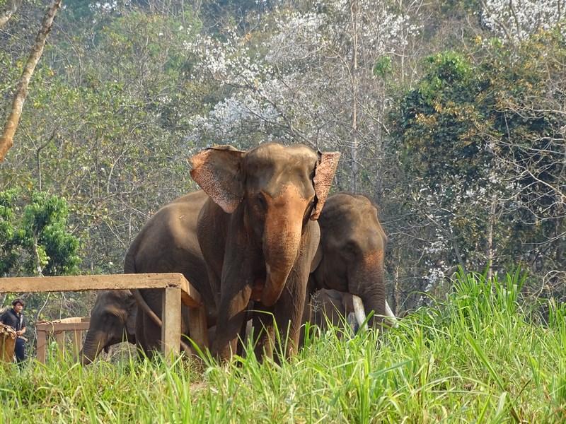Elefanti La Patara