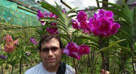 Imperator Si Orhidee