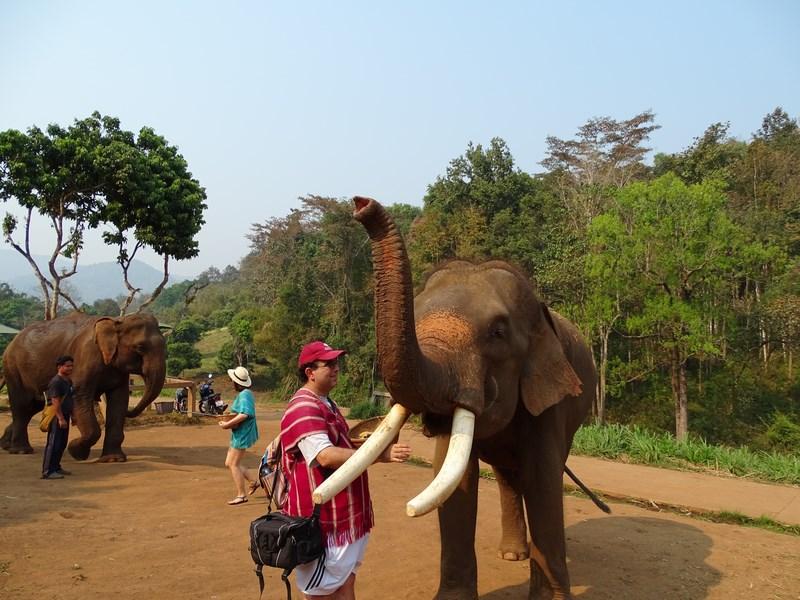 Hranesc Elefantul