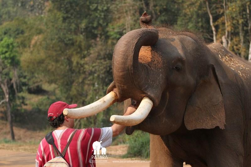 Mancare La Elefant