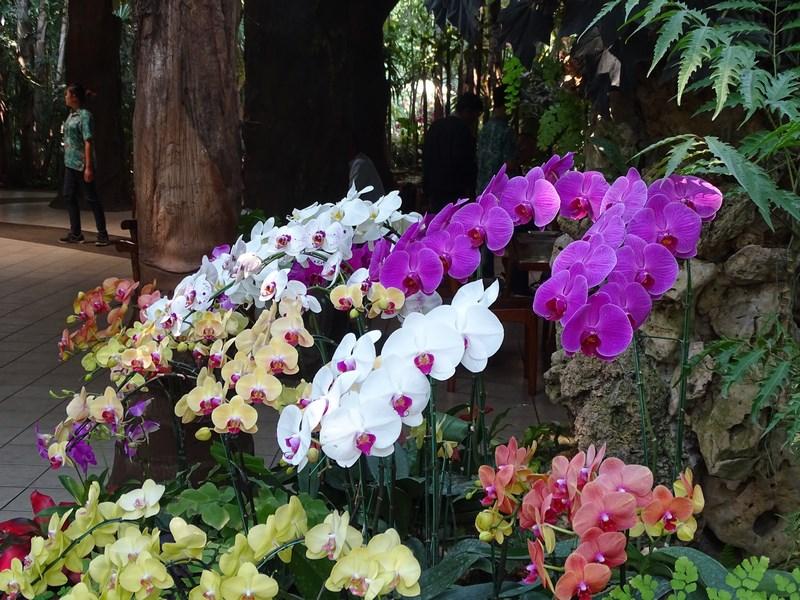 Multe Orhidee