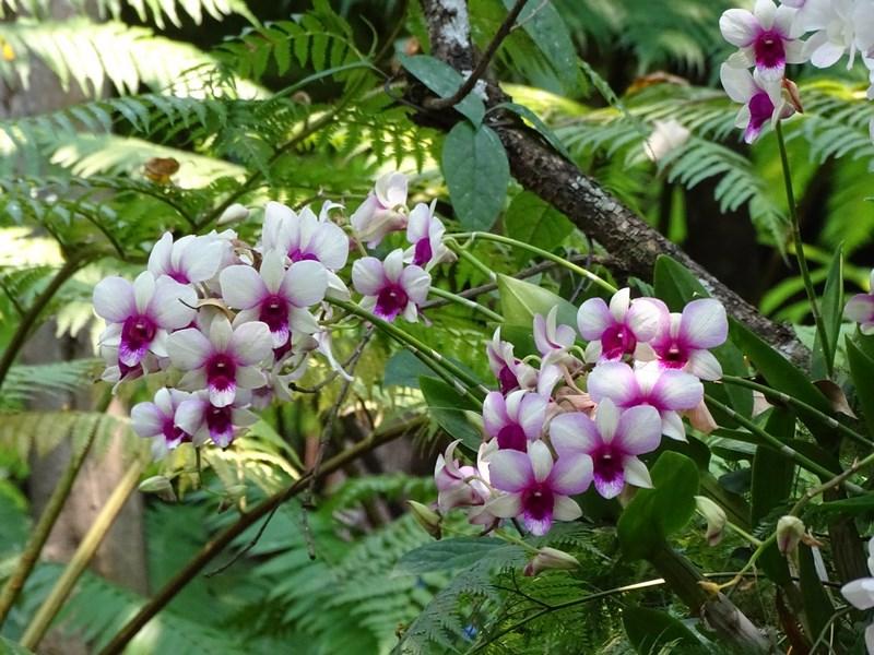 Orhidee Restaurant