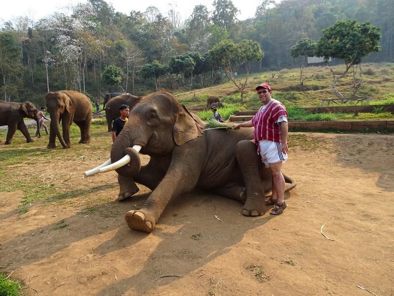 Maturare Elefant