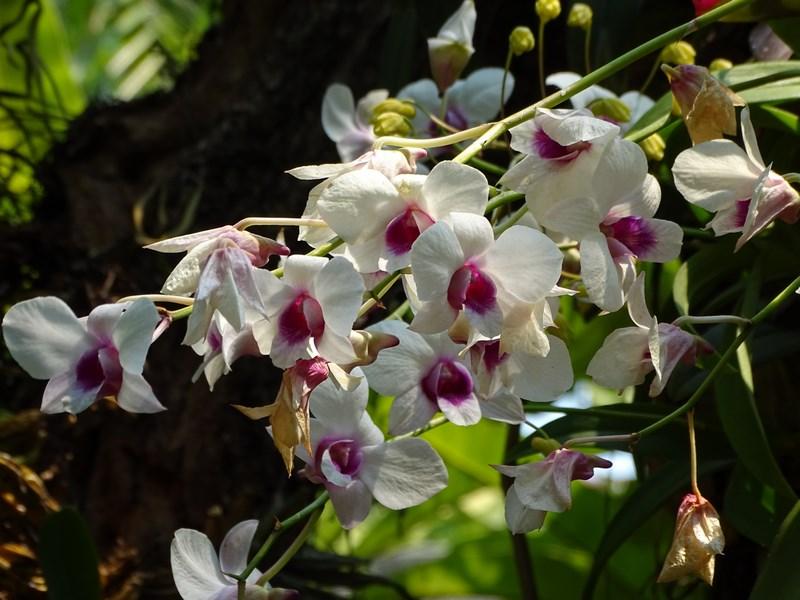 Orhidee Crescute In Sera