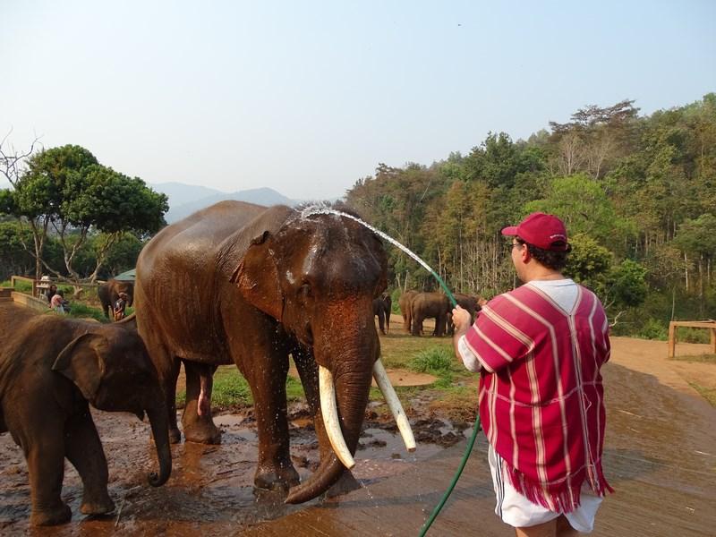 Elefant La Dus