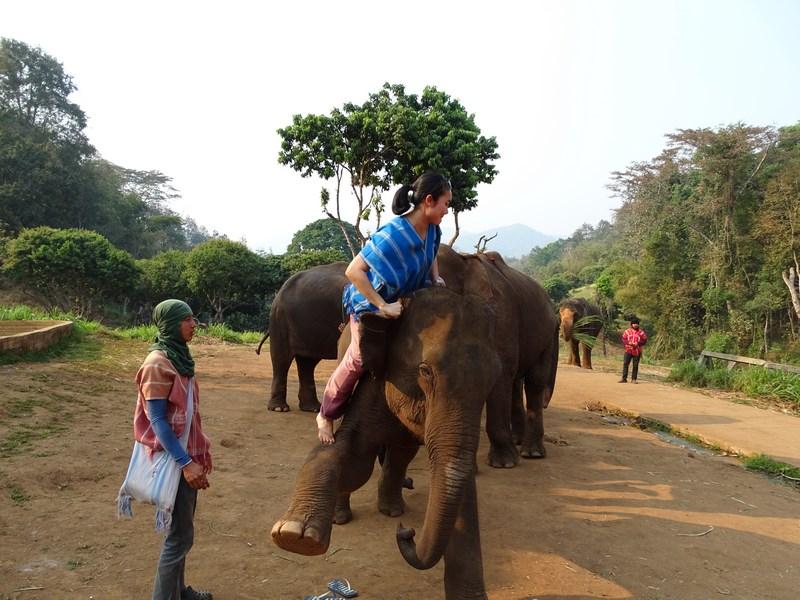 Urcatul Pe Elefant