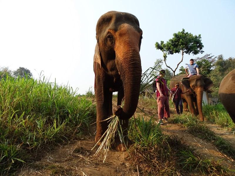 Fata In Fata Cu Un Elefant