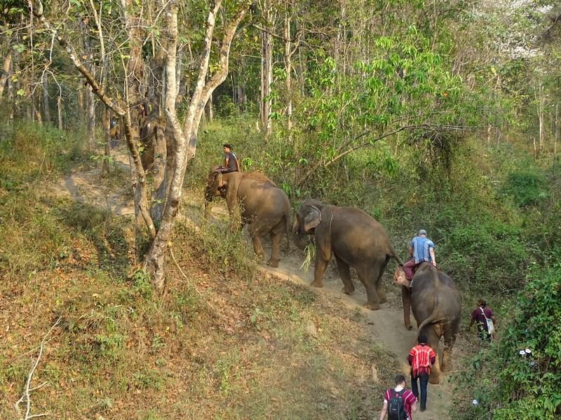 Elefanti In Jungla