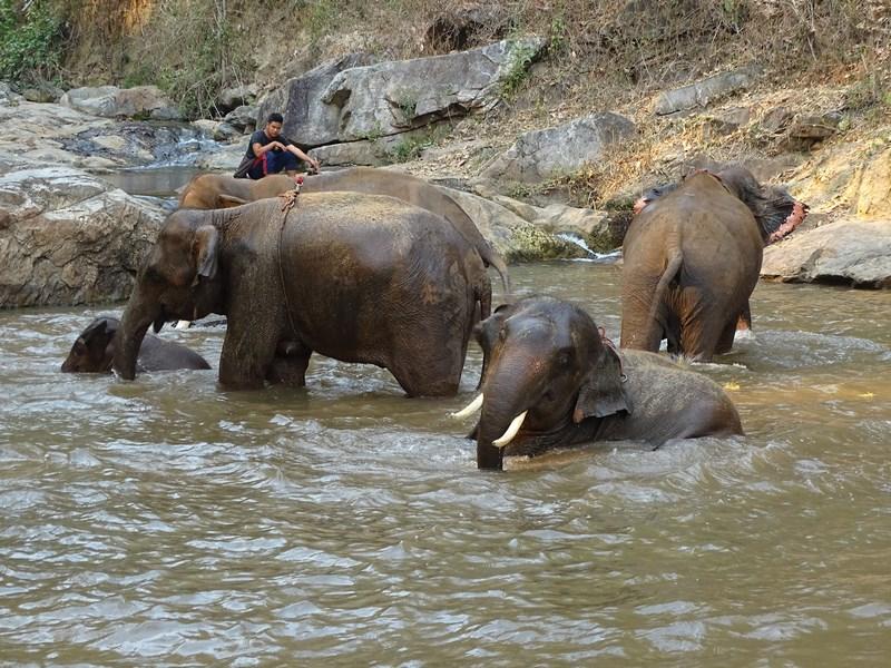 Elefanti La Scalda
