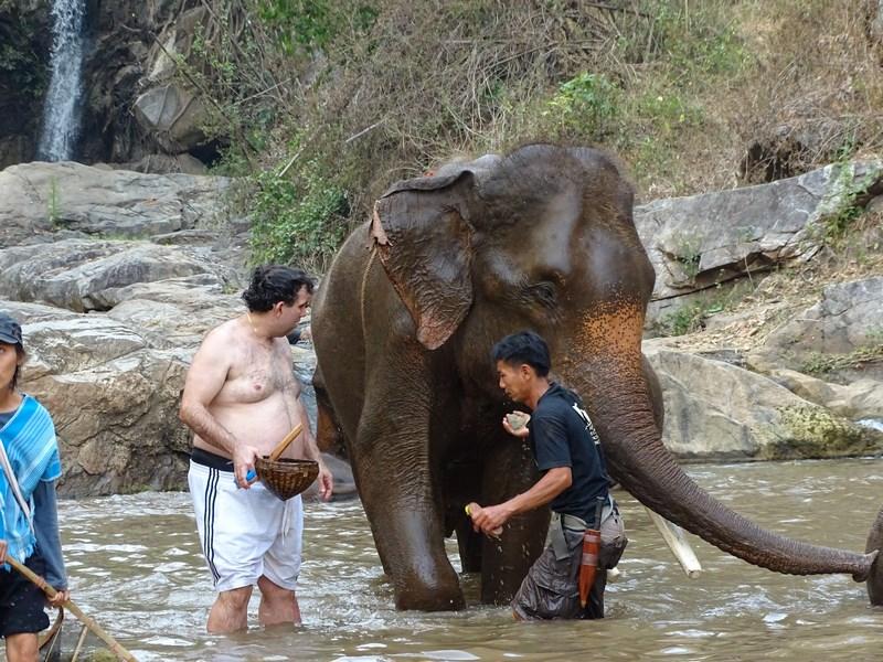 Spal Elefantul