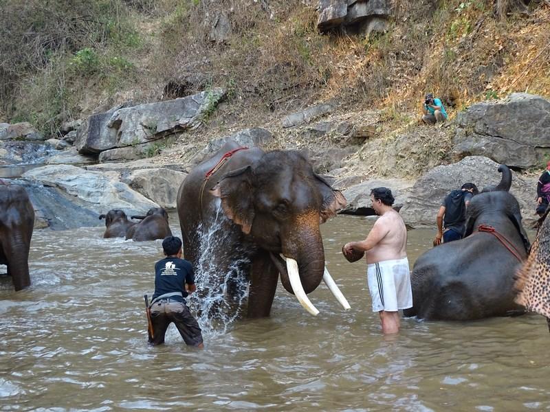Elefant In Apa